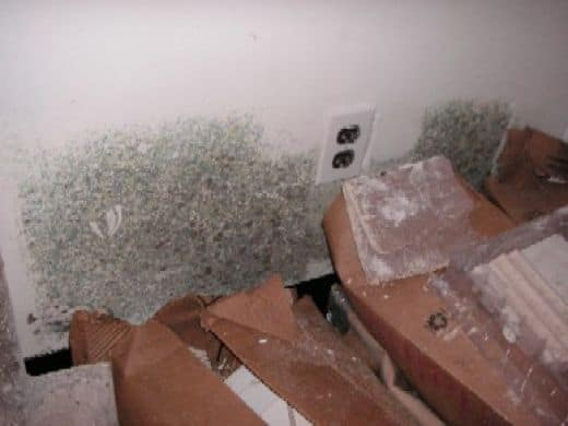 Getting Rid Of Mold In Your Home